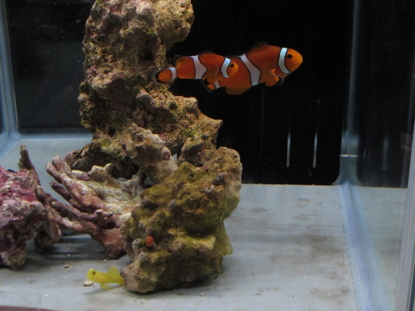 海水魚、試入荷中です。