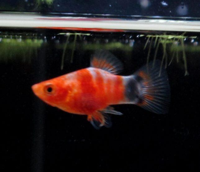 11月22日お魚の紹介