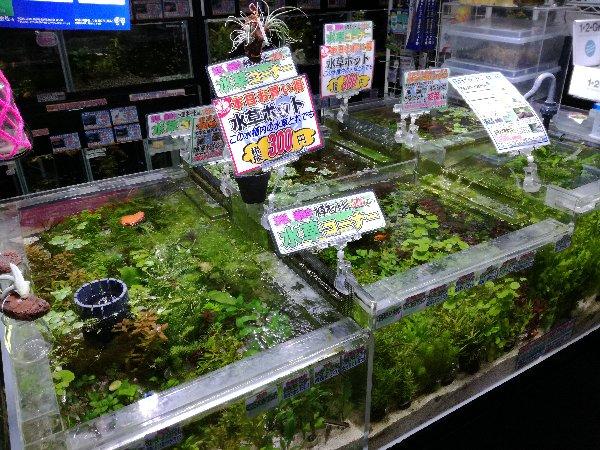 水草特価継続決定! コオロギ価格改定