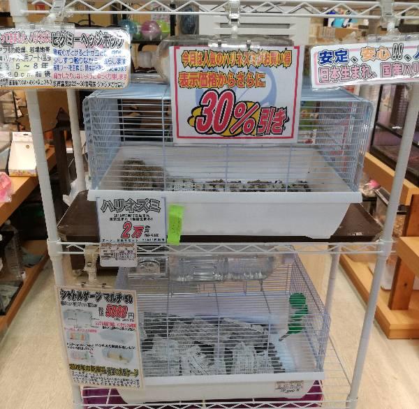 9月はハリネズミが表示価格より30%引きです。