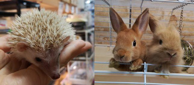 10月7日は、小動物ミニ触れ合い会を行います